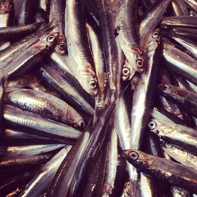 Smelts, Rialto Market, Venice, by Charlie Grosso